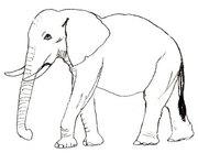 Слоны из Африки
