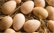 яйцо индюштное